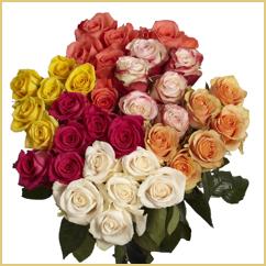 24 Rosas