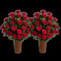 50 Rosas Rojas de Exportación