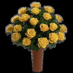 25 Rosas Amarillas de Exportación