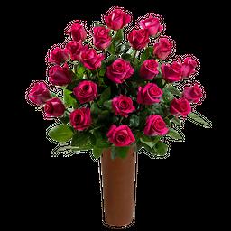 25 Rosas Fucsia de Exportación