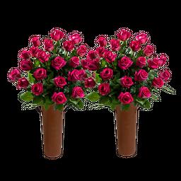 50 Rosas Fucsia de Exportación