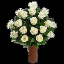25 Rosas Blancas de Exportación