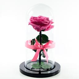 Rosa Encantada Rosado Medio en Urna 1 U