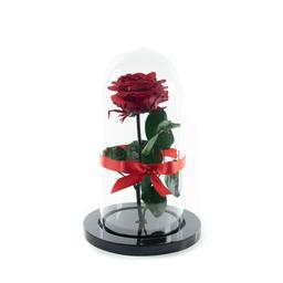 Rosa Eterna Roja en Urna 1 U