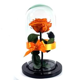 Rosa Eterna Naranja en Urna 1 U