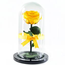 Rosa Eterna Amarilla en Urna 1 U
