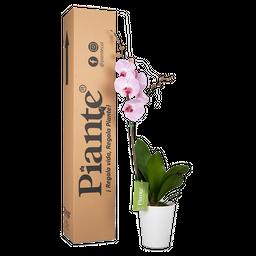 Orquídea rosada premium con matera plástica