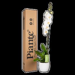 Orquídea blanca premium con matera cerámica
