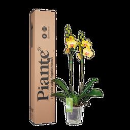 Orquídea amarilla supreme decor