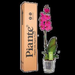 Orquídea morada premium decor