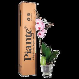 Orquídea rosada premium decor