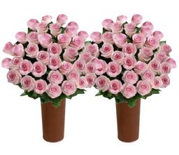 50 Rosas Rosadas de Exportación